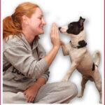 Εκπαίδευση σκύλων